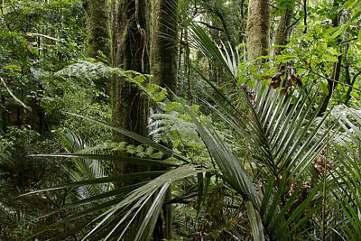 Tree Fern Photograph - Jungle Leaves by Les Cunliffe