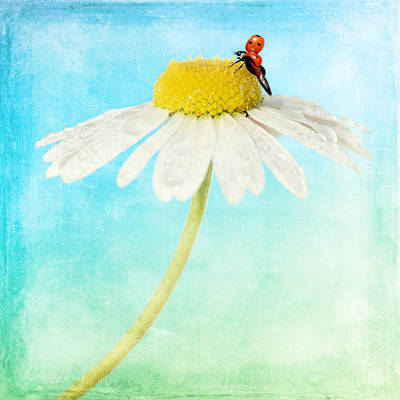 Feeling Mixed Media - Ladybug by Heike Hultsch