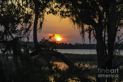 Photograph - Lowcountry Spanish Moss Sunset by Dale Powell