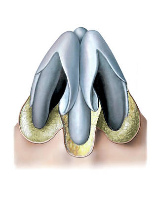 Nasal Cavity Art Print