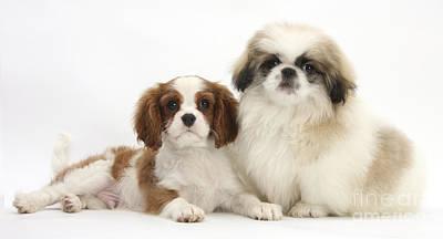 Puppies Art Print