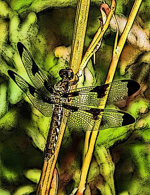 Dragonflys Photograph - 12 Spot by Joe Bledsoe