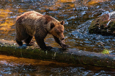Tongass Photograph - Usa, Alaska, Tongass National Forest by Jaynes Gallery