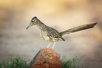 Roadrunner Photograph - Usa, Arizona, Santa Rita Mountains by Jaynes Gallery