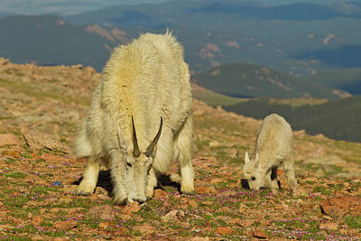 Usa, Colorado, Mount Evans Art Print by Jaynes Gallery