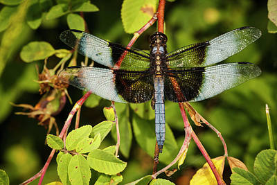 Dragonfly Photograph - Usa, Oregon, Albany, Freeway Ponds by Rick A Brown