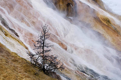 Mammoth Hot Springs Photograph - Usa, Wyoming, Yellowstone National Park by Jaynes Gallery