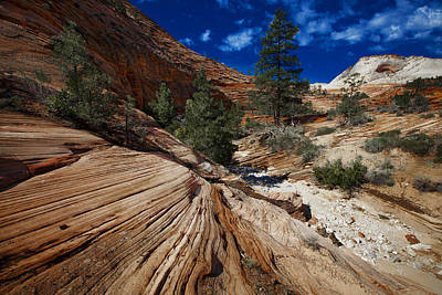 Photograph - Zion National Park Usa by Richard Wiggins