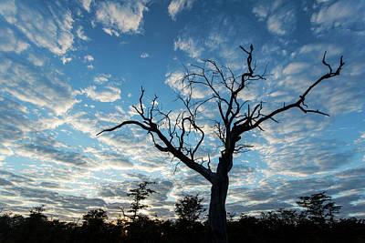Africa, Botswana, Moremi Game Reserve Art Print