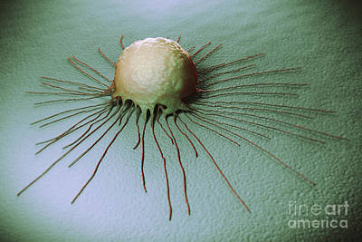 Photograph - Breast Cancer Cell by Science Picture Co