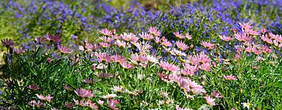 Photograph - Background Of Colorful Flowers by Michael Goyberg