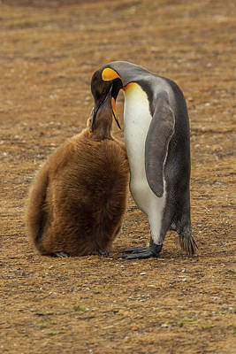 Falkland Islands Photograph - Falkland Islands, East Falkland by Jaynes Gallery