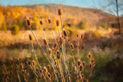 Photograph - Teasel Seed Heads Sussex County New Jersey Painted  by Rich Franco