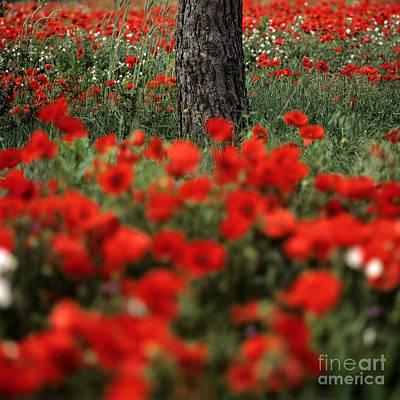 Field Of Poppies Print by Bernard Jaubert