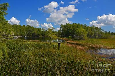 Photograph - 13- Florida Everglades by Joseph Keane