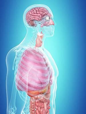 Human Internal Organs Art Print by Sciepro
