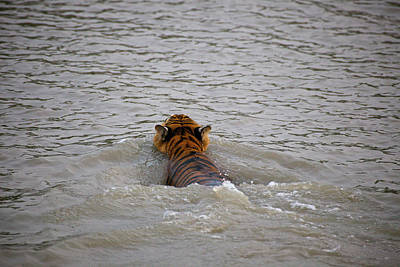 Ganges Photograph - India, West Bengal, Sunderbans National by Connie Bransilver