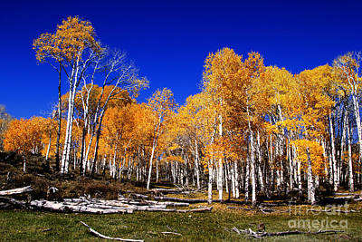 Rocky Mountain Fall Original by Southern Utah  Photography