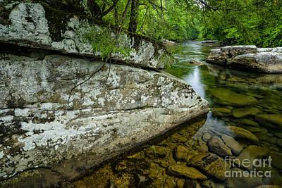 Spring Along Cranberry River Art Print by Thomas R Fletcher