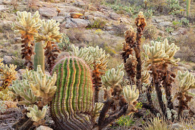Rincon Mountains Wall Art - Photograph - Usa, Arizona, Tucson by Jaynes Gallery