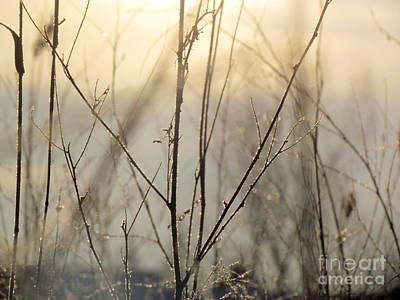 Photograph - Wildflowers Winter by France Laliberte