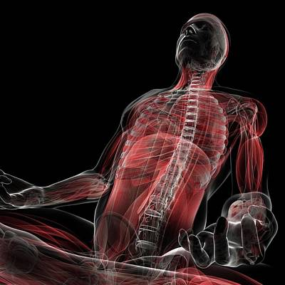 Male Musculature Art Print by Sciepro/science Photo Library