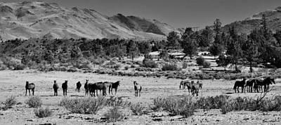 Digital Art - 131 by Wynema Ranch