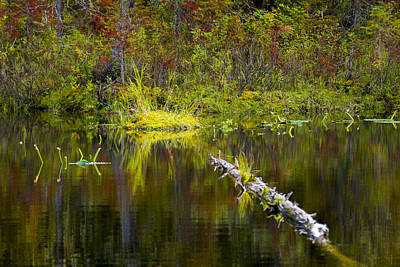Photograph - 131005b-052 Forest Marsh 2 by Albert Seger