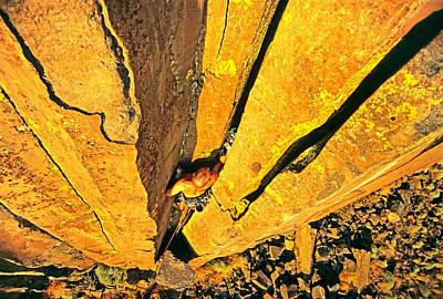 Yosemite Sam Photograph - Climber by Elijah Weber