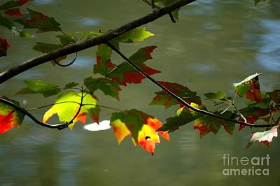 Photograph - Autumn Light by Christiane Hellner-OBrien