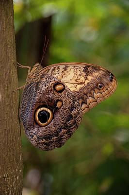 Butterfly Garden Photograph - Central America, Honduras, Roatan by Jim Engelbrecht