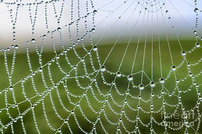 Spiderweb Photograph - Dew On Spiderweb  by Thomas R Fletcher