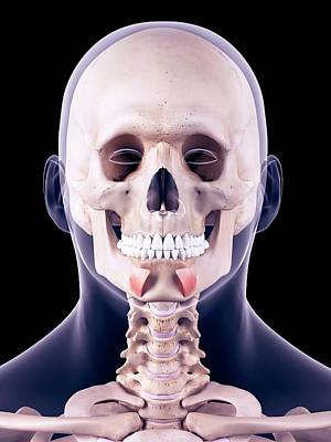 Facial Muscles Art Print by Sebastian Kaulitzki/science Photo Library