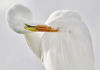 Great White Egret Art Print by Paulette Thomas