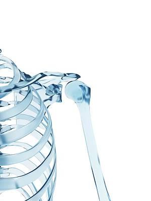Human Shoulder Joint Art Print by Sebastian Kaulitzki