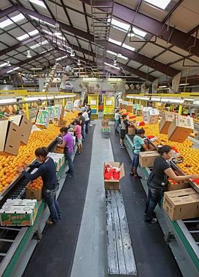 Florida House Photograph - Orange Farming by Jim West