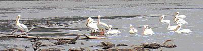Animals Photos - 14 Pelicans by Steve Karol