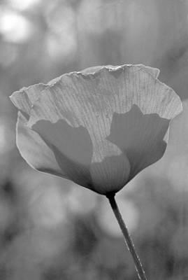 Springtime Painting - Poppy Flower by George Atsametakis