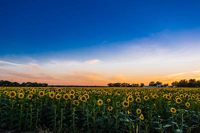 Photograph - Texas Sunset Over The Sunflower Field by Melinda Ledsome