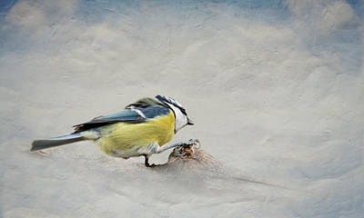 Winter Fun Mixed Media - Tit by Heike Hultsch