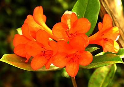 Photograph - Tropical Flower by Robert Lozen