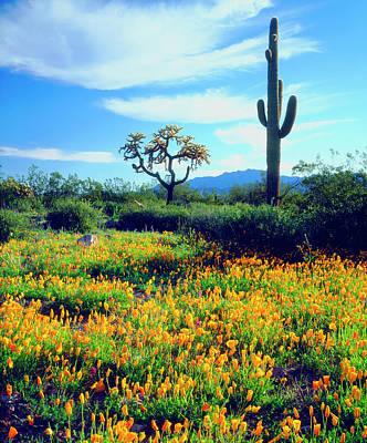 Usa, Arizona, Organ Pipe Cactus Art Print