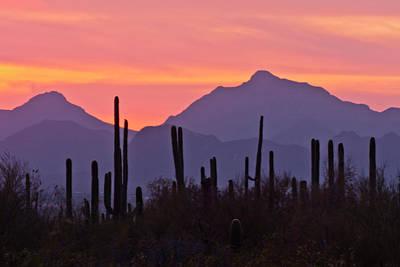 Yellow And Pink Sunset Photograph - Usa, Arizona, Saguaro National Park by Jaynes Gallery