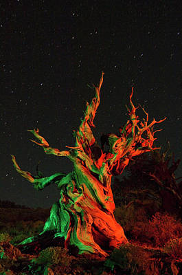 Bristlecone Pine Photograph - Usa, California, White Mountains by Jaynes Gallery