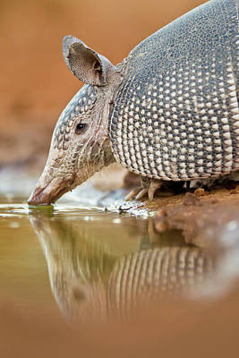 Armadillo Photograph - Usa, Texas, Santa Clara Ranch by Jaynes Gallery