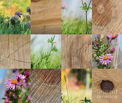 Photograph - Wood Lover by France Laliberte