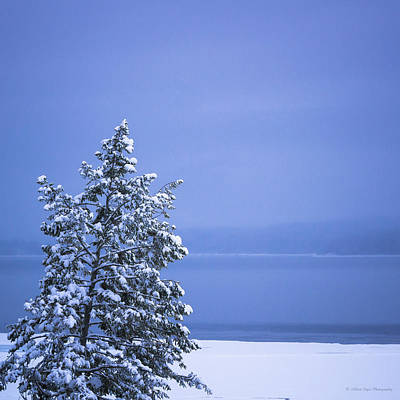 Photograph - 140303a-12 Winter Blues by Albert Seger