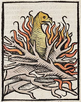 1491 Phoenix In Flames Hortus Sanitatis Art Print