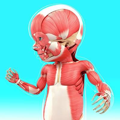 Oblique Photograph - Baby's Muscular System by Pixologicstudio