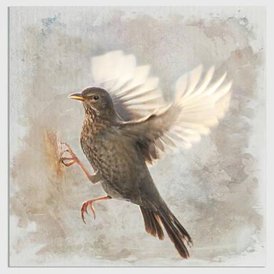 Blackbird Mixed Media - Bird  by Heike Hultsch